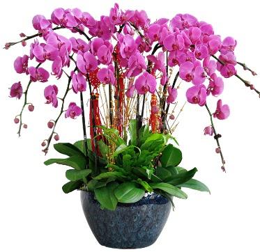 9 dallı mor orkide  Erzurum çiçek yolla