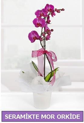Seramik içerisinde birinci kalite tek dallı mor orkide  Erzurum internetten çiçek siparişi