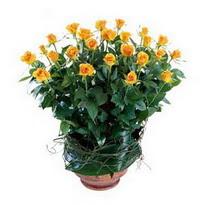 Erzurum İnternetten çiçek siparişi  10 adet sari gül tanzim cam yada mika vazoda çiçek