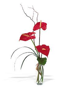 Erzurum çiçek servisi , çiçekçi adresleri  cam yada mika Vazoda 3 adet  antoryum