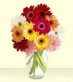 Erzurum çiçekçiler  cam yada mika vazoda 15 özel gerbera