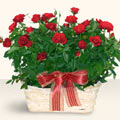 Erzurum internetten çiçek siparişi  11 adet kirmizi gül sepette