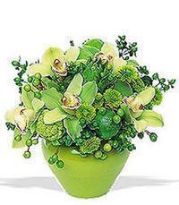cam yada mika vazoda 5 adet orkide   Erzurum internetten çiçek satışı