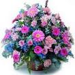 karisik mevsim kir çiçekleri  Erzurum çiçek siparişi vermek