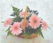 gerbera çiçeklerinde sepet   Erzurum online çiçek gönderme sipariş
