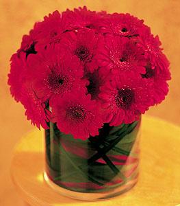 Erzurum anneler günü çiçek yolla  23 adet gerbera çiçegi sade ve sik cam içerisinde