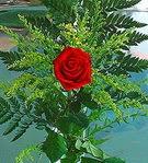 1 adet kirmizi gül buketi   Erzurum yurtiçi ve yurtdışı çiçek siparişi