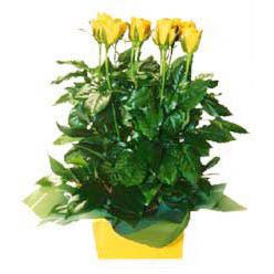 11 adet sari gül aranjmani  Erzurum internetten çiçek satışı