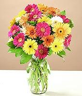 Erzurum çiçek satışı  17 adet karisik gerbera