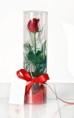 Erzurum online çiçek gönderme sipariş  Silindir vazoda tek kirmizi gül