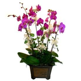 Erzurum çiçek yolla , çiçek gönder , çiçekçi   4 adet orkide çiçegi