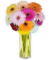 Erzurum güvenli kaliteli hızlı çiçek  Farkli renklerde 15 adet gerbera çiçegi