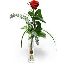 Erzurum çiçek yolla  Sana deger veriyorum bir adet gül cam yada mika vazoda