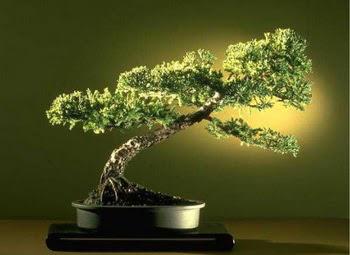 ithal bonsai saksi çiçegi  Erzurum çiçek online çiçek siparişi