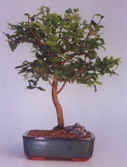 Erzurum anneler günü çiçek yolla  ithal bonsai saksi çiçegi  Erzurum çiçek gönderme