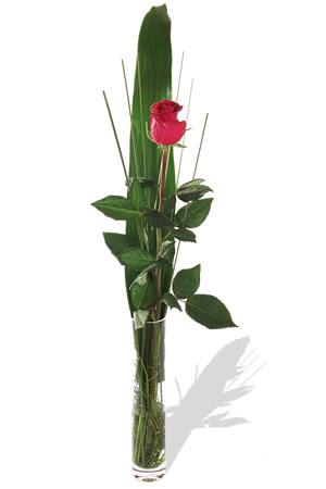 1 adet cam vazo içerisinde kirmizi gül  Erzurum 14 şubat sevgililer günü çiçek