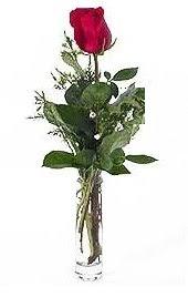 Vazo içerisinde 1 adet kirmizi gül  Erzurum İnternetten çiçek siparişi