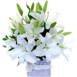 Erzurum online çiçek gönderme sipariş  2 dal cazablanca vazo çiçeği