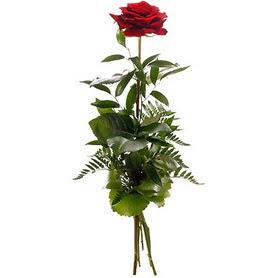 Erzurum internetten çiçek satışı  1 adet kırmızı gülden buket