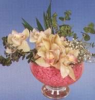 Erzurum ucuz çiçek gönder  Dal orkide kalite bir hediye