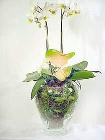 Erzurum uluslararası çiçek gönderme  Cam yada mika vazoda özel orkideler