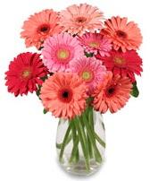 vazo içerisinde 13 adet gerbera çiçeği  Erzurum çiçek servisi , çiçekçi adresleri