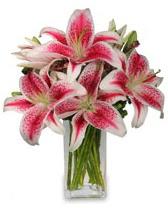 Vazo içerisinde 5 dal kazablanka çiçeği  Erzurum İnternetten çiçek siparişi