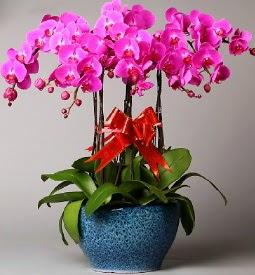 7 dallı mor orkide  Erzurum çiçek satışı