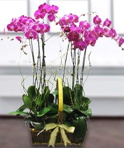 4 dallı mor orkide  Erzurum çiçekçi mağazası