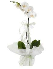 1 dal beyaz orkide çiçeği  Erzurum yurtiçi ve yurtdışı çiçek siparişi