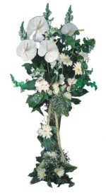 Erzurum ucuz çiçek gönder  antoryumlarin büyüsü özel