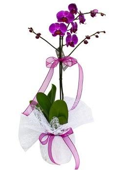 Tek dallı mor orkide  Erzurum cicekciler , cicek siparisi