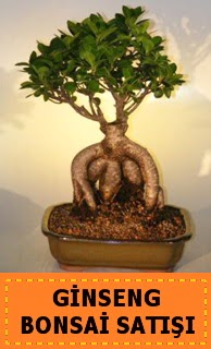 Ginseng bonsai satışı japon ağacı  Erzurum çiçek yolla , çiçek gönder , çiçekçi