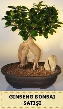 İthal Ginseng bonsai satışı japon ağacı  Erzurum çiçek servisi , çiçekçi adresleri