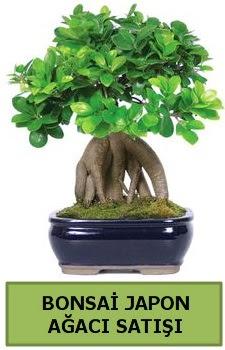 Bonsai japon ağacı satışı  Erzurum uluslararası çiçek gönderme