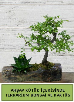 Ahşap kütük bonsai kaktüs teraryum  Erzurum güvenli kaliteli hızlı çiçek