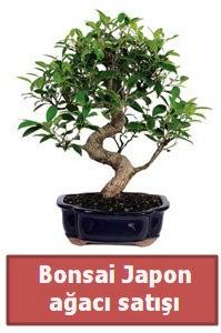 Japon ağacı bonsai satışı  Erzurum çiçek servisi , çiçekçi adresleri