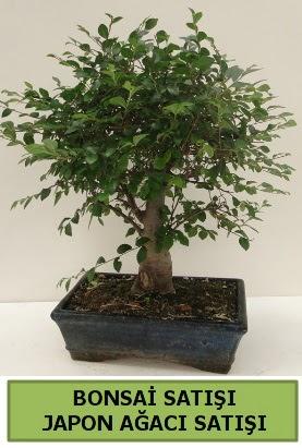 Minyatür bonsai japon ağacı satışı  Erzurum çiçek siparişi vermek
