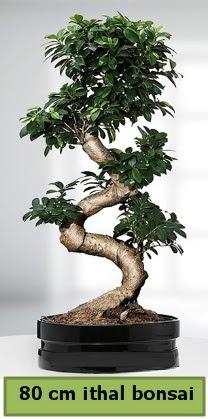80 cm özel saksıda bonsai bitkisi  Erzurum cicekciler , cicek siparisi