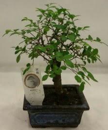 Minyatür ithal japon ağacı bonsai bitkisi  Erzurum uluslararası çiçek gönderme