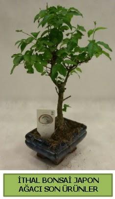 İthal bonsai japon ağacı bitkisi  Erzurum çiçekçi telefonları