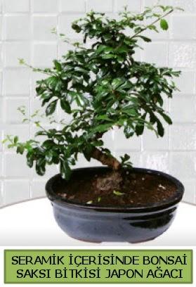 Seramik vazoda bonsai japon ağacı bitkisi  Erzurum çiçek servisi , çiçekçi adresleri
