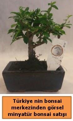 Japon ağacı bonsai satışı ithal görsel  Erzurum online çiçek gönderme sipariş