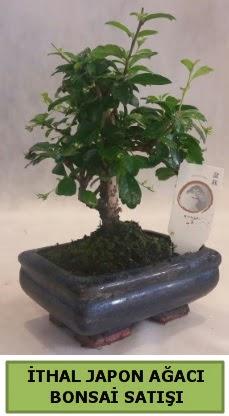 İthal japon ağacı bonsai bitkisi satışı  Erzurum cicekciler , cicek siparisi