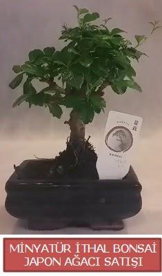 Küçük görsel bonsai japon ağacı bitkisi  Erzurum 14 şubat sevgililer günü çiçek