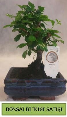Bonsai ithal görsel minyatür japon ağacı  Erzurum anneler günü çiçek yolla