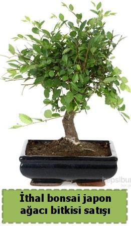 İthal bonsai saksı çiçeği Japon ağacı satışı  Erzurum internetten çiçek siparişi
