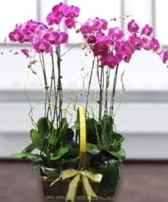 7 dallı mor lila orkide  Erzurum çiçek siparişi vermek