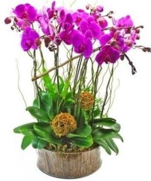 Ahşap kütükte lila mor orkide 8 li  Erzurum çiçek mağazası , çiçekçi adresleri