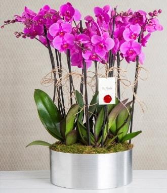 11 dallı mor orkide metal vazoda  Erzurum çiçek siparişi vermek